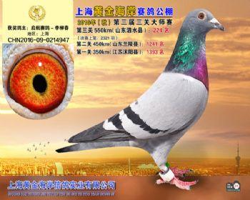 上海黄金海岸决赛第224名