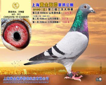 上海黄金海岸决赛第225名