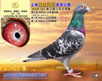 上海黄金海岸决赛第226名