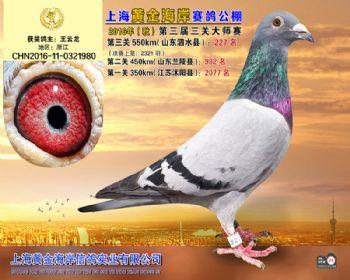 上海黄金海岸决赛第227名
