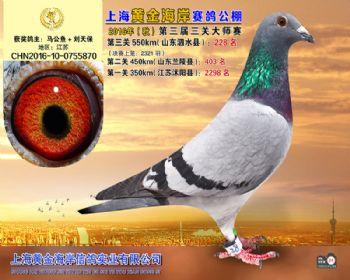 上海黄金海岸决赛第228名