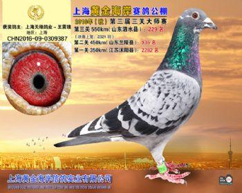 上海黄金海岸决赛第229名