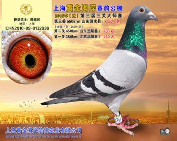 上海黄金海岸决赛第231名