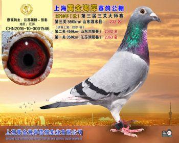 上海黄金海岸决赛第232名