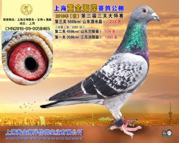 上海黄金海岸决赛第233名
