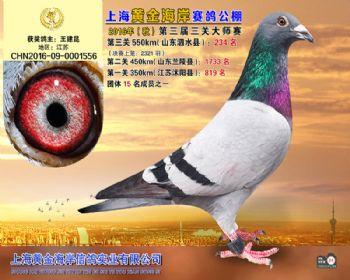 上海黄金海岸决赛第234名