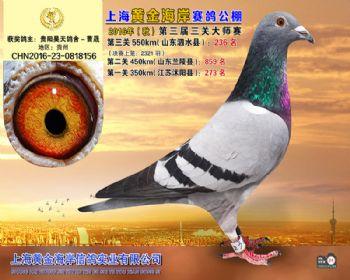 上海黄金海岸决赛第236名