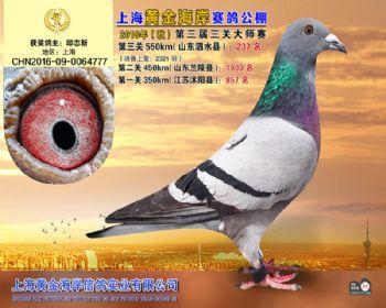 上海黄金海岸决赛第237名