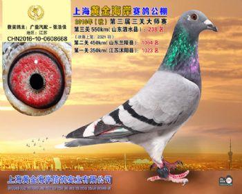 上海黄金海岸决赛第238名