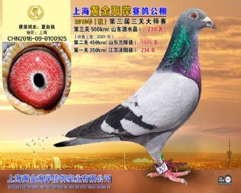 上海黄金海岸决赛第239名