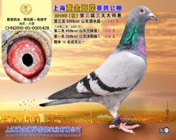 上海黄金海岸决赛第240名