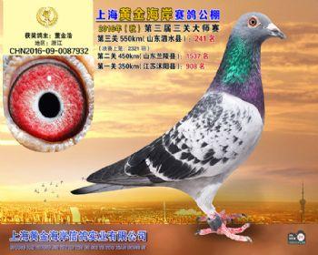 上海黄金海岸决赛第241名