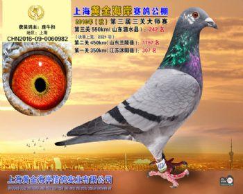 上海黄金海岸决赛第242名