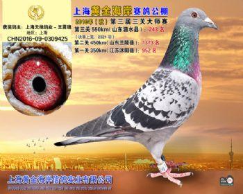 上海黄金海岸决赛第243名