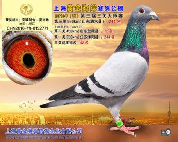 上海黄金海岸决赛第244名