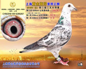 上海黄金海岸决赛第245名