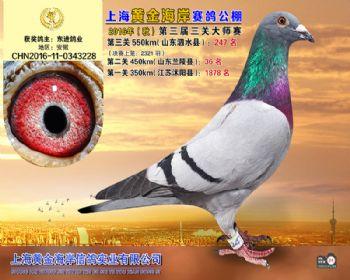 上海黄金海岸决赛第247名