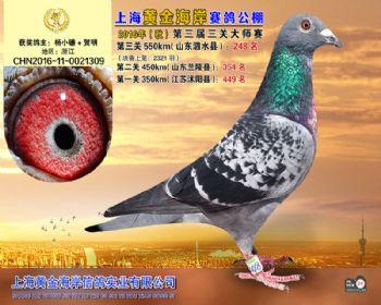 上海黄金海岸决赛第248名