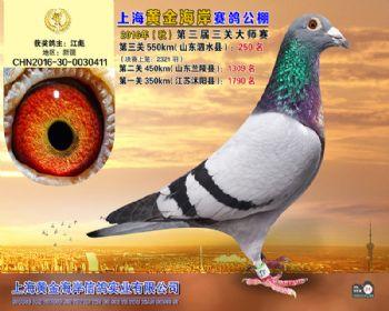 上海黄金海岸决赛第250名