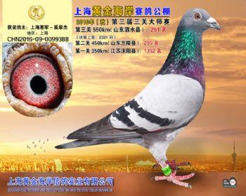 上海黄金海岸决赛第251名