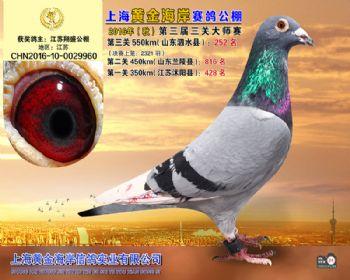 上海黄金海岸决赛第252名