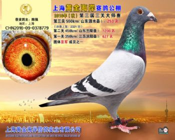 上海黄金海岸决赛第253名