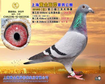 上海黄金海岸决赛第254名