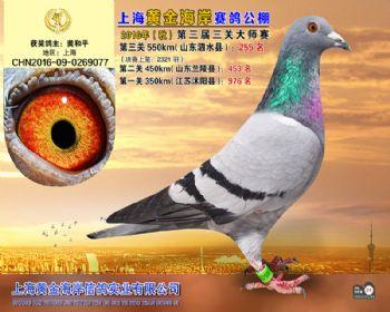 上海黄金海岸决赛第255名
