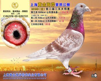 上海黄金海岸决赛第256名