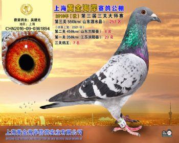 上海黄金海岸决赛第257名
