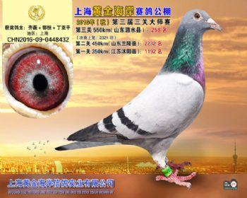上海黄金海岸决赛第258名