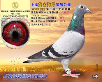 上海黄金海岸决赛第259名
