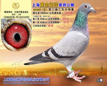 上海黄金海岸决赛第260名