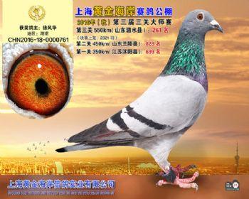 上海黄金海岸决赛第261名