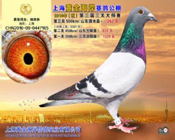 上海黄金海岸决赛第262名