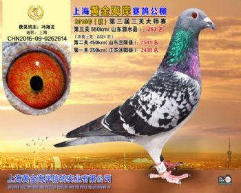 上海黄金海岸决赛第263名