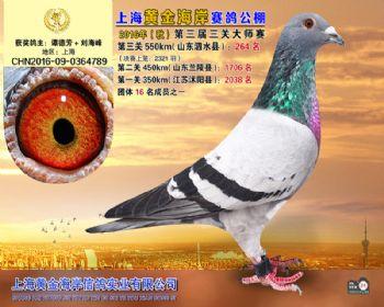 上海黄金海岸决赛第264名