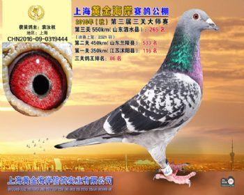 上海黄金海岸决赛第265名