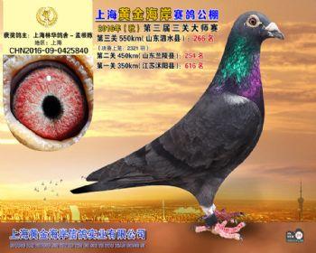 上海黄金海岸决赛第266名