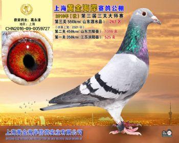 上海黄金海岸决赛第267名