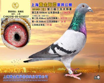 上海黄金海岸决赛第268名