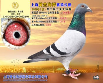 上海黄金海岸决赛第269名
