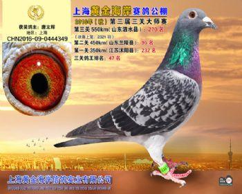 上海黄金海岸决赛第270名