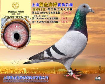 上海黄金海岸决赛第271名
