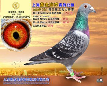 上海黄金海岸决赛第272名