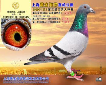 上海黄金海岸决赛第275名