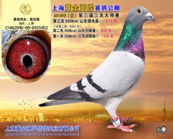 上海黄金海岸决赛第276名