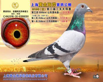 上海黄金海岸决赛第277名