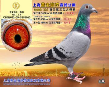上海黄金海岸决赛第278名