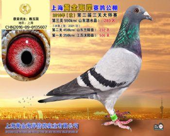 上海黄金海岸决赛第280名